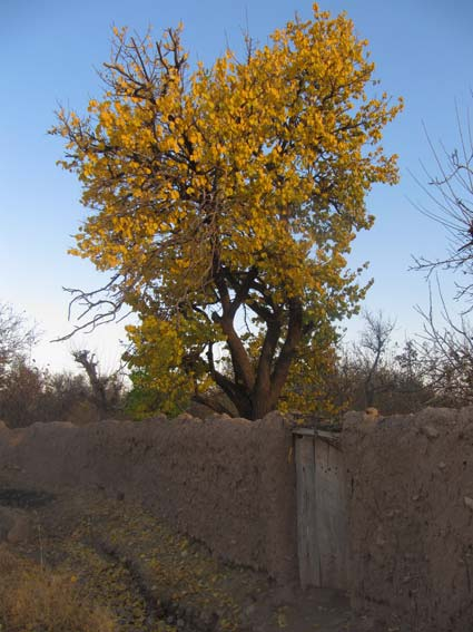 گناباد - روستای سنو